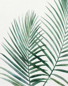 Emerald Palm Fronds art print by Kristian Gallagher for Modern Tropical Studios. Modern Tropical, Tropical Art, Tropical Prints, Tropical Posters, Watercolor Flowers, Watercolor Art, Plant Painting, Palm Fronds, Painted Leaves