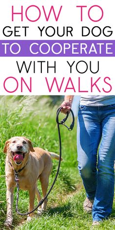 Dog walking tips to get your dog to cooperate with you on walks. (It's not as hard as you think!)