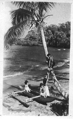 Samoa Postcard Samoan children collecting coconuts