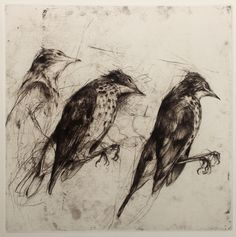 Jake Muirhead, 'Thrush', soft-ground etching and drypoint