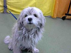 Pictures of URGENT on 2/25@DEVORE San Bern a Terrier (Unknown Type, Small) for adoption in San Bernardino, CA who needs a loving home.