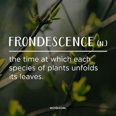 frondescence