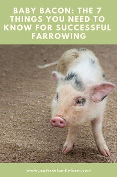 Everything you need to know about farrowing so that you are ready when the big day arrives! Everything you need to know about farrowing so that you are ready when the big day arrives! Spanish Activities, Teaching Spanish, Spanish Teacher, Learn Spanish, Spanish Games, Spanish Songs, Speak Spanish, Spanish Grammar, Spanish 1