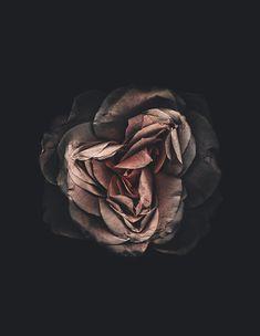 pink | black