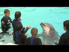 """Rady Children's Hospital Patients take a """"DIP"""" with dolphins at SeaWorld San Diego."""
