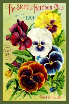 Olde America Antiques   Quilt Blocks   National Parks   Bozeman Montana : Flowers - Storrs and Harrison 1901 Pansies