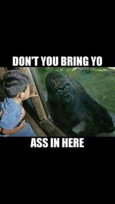47 best harambe images on pinterest funny memes harambe meme