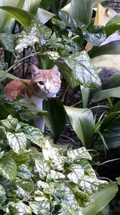 In the shrubbery