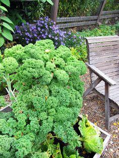 Kana-lehtikaali-pastapaistos Parsley, Lettuce, Vegetarian, Herbs, Vegetables, Food, Meal, Essen, Herb