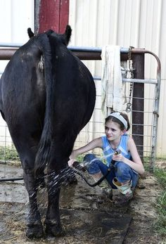 Cattle calling: 12-year-old's love for showing farm animals came at early age