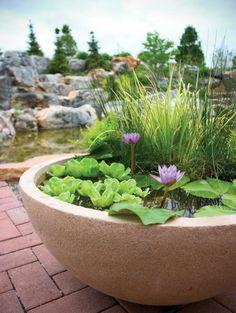 On a une proposition alternative compacte et abordable pour ceux qui adorent être en contact avec l'eau et n'ont pas de jardin. Le jardin aquatique en pot