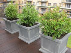 Garden Pots and Planters Garden Pots, Garden Landscaping, Planter Pots, Landscapes, Front Yard Landscaping, Paisajes, Garden Planters, Scenery