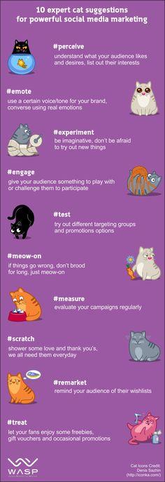 10 Expert Social Media Marketing Tips…From Cats