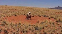 """Un equipo de biólogos de la Universidad Estatal de Florida acaba de descubrir que los """"anillos de hadas"""" que se cuentan por miles en el desierto de Namibia siguen una especie de """"ciclo vital"""" que los hace aparecer y desaparecer con regularidad. + info: http://www.ecoapuntes.com.ar/2012/07/el-misterio-de-los-circulos-de-namibia/"""