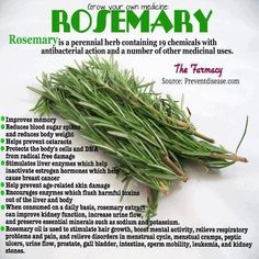 ROSEMARY is a great ANTIOXIDANT, and very delicious for cooking. For CLEANSING use: Place 2 teaspoons of Rosemary, into hot water and STEEP. Drink before meals, for better digestion and liver support. Improves circulation, muscle pain, eczema, nerves and sciatic pain. www.selfmender.com