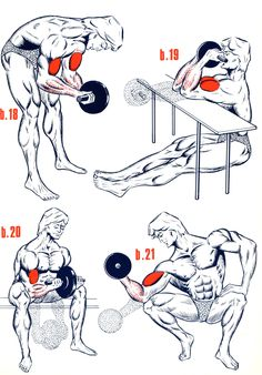 Muscle Building Tips. Gain More Mass With These Weight Training Tips! You can enjoy yourself and see the progress of an effective workout routine. Gym Workout Tips, Weight Training Workouts, Fitness Workouts, At Home Workouts, Bodybuilding Training, Bodybuilding Workouts, Men's Bodybuilding, Biceps And Triceps, Dumbbell Workout