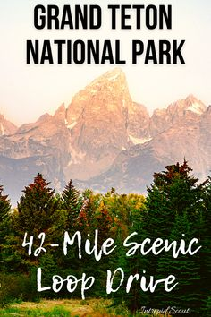 The 42-Mile Scenic Loop Drive is one of the best ways to experience the beauty of Grand Teton National Park. Here is everything that you need to know! Signal Mountain Lodge, Mountain View, Grand Teton National Park, National Parks, Teton Mountains, Animal Habitats, Ansel Adams, Park Service, North America