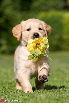 A flower for my love... #dogs   #flowers