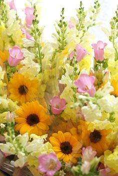 Fancy, Flowers, Plants, Stitch, Valentines Day Weddings, Baby Dachshund, Wonderful Flowers, Nice Asses, Full Stop