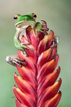 Frog.  #animals #photography #1816 #remington