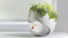 2-in-1 planter and fishbowl!!