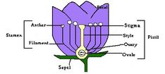 Easy to understand discription of parts of a flower