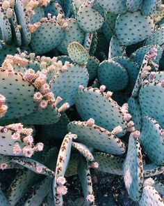 cactus flower blooms at night Plant Aesthetic, Flower Aesthetic, Cacti And Succulents, Cactus Plants, Cactus Decor, Desert Plants, Agaves, Cactus Flower, Pretty Wallpapers