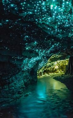 Waitomo Glowworm Caves | Travel | Vacation Ideas | Road Trip | Places to Visit | N | Sightseeing Tour | Tourist Attraction | Tour | Natural Feature