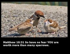 "Jesus stated that, though these small birds were counted as of such little worth, ""yet not one of them will fall to the ground without your Father's knowledge,"" ""Not one of them goes forgotten before God."""
