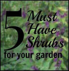 Shrubs add structure to your garden and will last a long time. Here I'm sharing 5 must have shrubs you'll love with multiple seasonal interest.