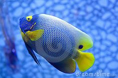 Tropical Fish Stock Photography - Image: 16881392