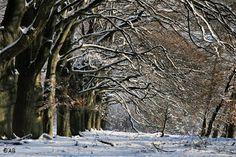 winterse bomen Planken Wambuis