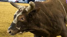 HARRIS GETS THE CALL TO FACE BUSHWACKER: Chad Berger has selected J.W. Harris to face Bushwacker on June 13 during his Touring Pro Division event in Bismarck, N.D.