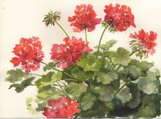 Susie Short's Watercolor Splashes & Splatters: Painting Geraniums - March 2009
