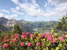 Dort wo die Alpenrosen blühen! Genießen Sie die Alpenrosenwochen im Kleinwalsertal und wandern Sie über rosa überzogene Berghänge. Ein Frühsommer-Urlaub für die Berg- und Wanderliebhaber!  Weitere Informationen hier: http://www.kleinwalsertal.com/de/suchen-und-buchen/angebote-und-pauschalen/grenzenlos-wandern?utm_source=austria.at%20KW%2012&utm_medium=newsletter%20link%20grenzenlos%20wandern&utm_content=grenzenlos%20wandern&utm_campaign=wandern