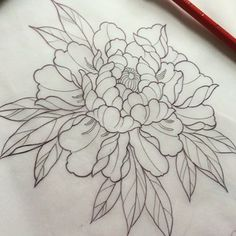 Fraser Peek Tattoo : Photo