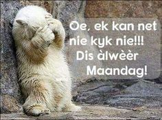 This does not work! They find you any ways! Fibro Flare, Words To Live By Quotes, Afrikaanse Quotes, Goeie More, Stupid People, Animal Memes, Polar Bear, Good Morning, Funny Cats
