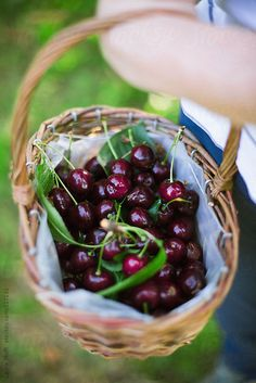 Always Fun: Cherry Picking! Susanoo Naruto, Cherry Picking, Sweet Cherries, Delicious Fruit, Summer Fruit, Fruits And Vegetables, Farmers Market, Fresh Fruit, Summer Time