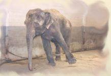 Χόρχε Μπουκάι: Ο αλυσοδεμένος ελέφαντας Good To Know, Wise Words, Elephant, Horses, Grammar, Animals, Magic, Animales, Animaux