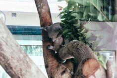 #animal #themes #animals #Bangkok #Thailand. #day  #mammal #nopeople