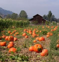 Every time I visit Bate's Nut Farm in the fall, I just crave farm life. :-)