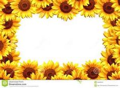 free sunflower borders - - Yahoo Image Search Results