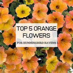 Find out what the 5 best orange flowers for attracting hummingbirds are, and even learn how to properly grow them to maximize their potential. Attracting Hummingbirds, How To Attract Hummingbirds, Orange Flowering Plants, Hummingbird Flowers, Orange Flowers, Gardening Tips, Planting Flowers, Attraction, Backyard