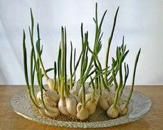 Как выращивать овощи дома