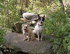 image indigosky1 @ flickr  Horsetail Falls - dogs hiking  Great hike for dogs, near Strawberry CA.