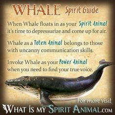 In-depth Whale Symbolism & Whale Meanings! Whale as a Spirit, Totem, & Power Animal. Plus, Whale in Celtic & Native American Symbols & Whale Dreams! Spirit Animal Totem, Animal Spirit Guides, Your Spirit Animal, Animal Totems, Animal Symbolism, Native American Animals, Native American Symbols, American Indians, Astrology
