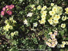 Böschung: Ein bunter Blütenteppich Plants, Nice Asses, Plant, Planets