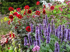 Blog: Planting in the Long border at Gravetye Manor Hotel. Agastache 'Blackadder' with Dahlia and Verbena.  atgdesign.org.uk