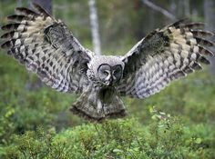 It's an owl, duh.