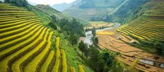 Rice terraces - Mu Cang Chai Bus Tickets, Travel Route, Train Travel, Lao Cai, North Vietnam, Rice Terraces, Bus Station, Chiang Mai